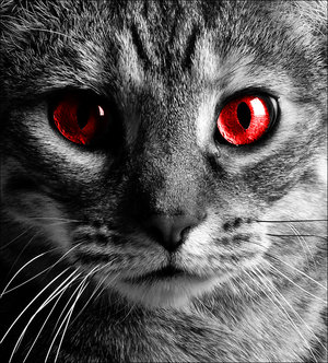red_cat_eye_picture_jpg